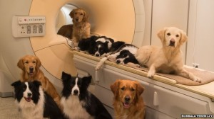 Dogs and MRI